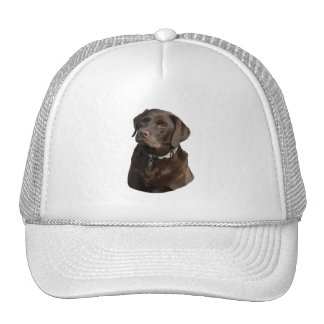 Chocolate Labrador photo portrait Mesh Hats