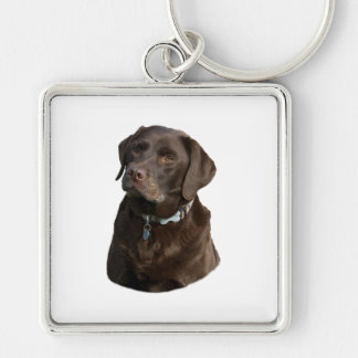 Chocolate Labrador photo portrait Keychain