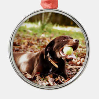 Chocolate Labrador Playing With Ball Silver-Colored Round Decoration