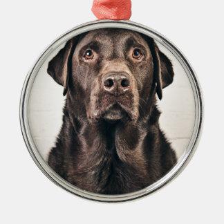 Chocolate Labrador Portrait Christmas Ornament