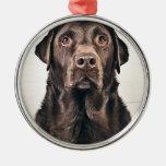 Chocolate Labrador Portrait Ornament