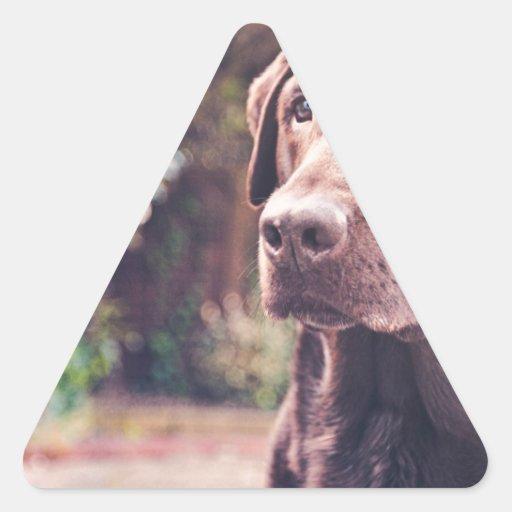 Chocolate Labrador Portrait Triangle Stickers