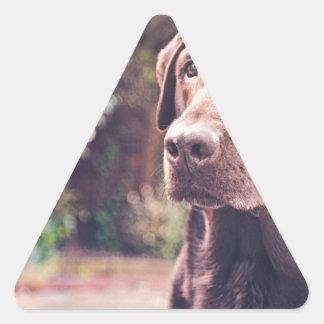 Chocolate Labrador Portrait Triangle Sticker