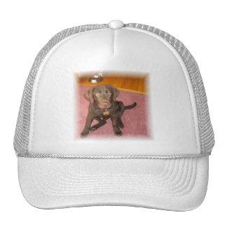 Chocolate Labrador Puppy  Baseball Hat