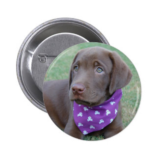 Chocolate Labrador Puppy Button
