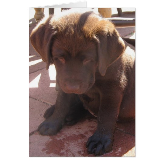Chocolate Labrador Puppy Card