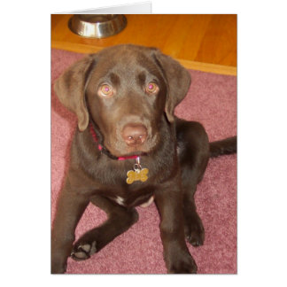 Chocolate Labrador Puppy  Greeting Card
