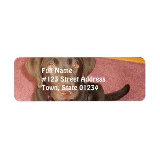 Chocolate Labrador Puppy  Mailing Label Return Address Label