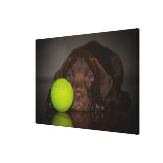 Chocolate Labrador Puppy With Tennis Ball Canvas Print