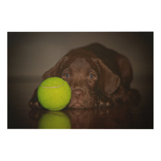 Chocolate Labrador Puppy With Tennis Ball Wood Print