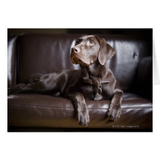 Chocolate Labrador Retriever Card