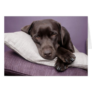 Chocolate labrador retriever dog photo blank card