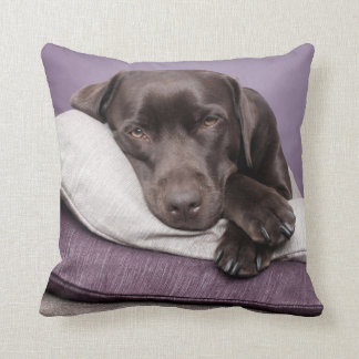 Chocolate labrador retriever dog sleepy on pillow