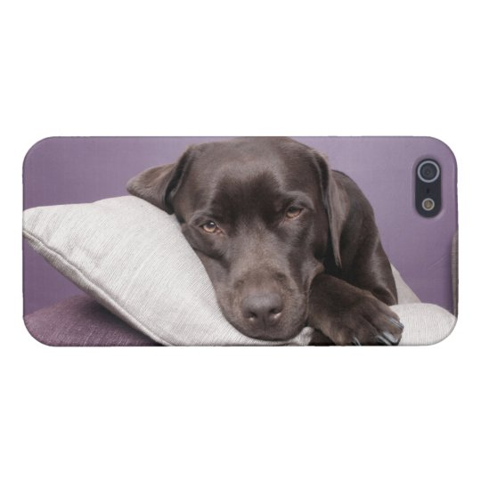 Chocolate labrador retriever dog sleepy on pillows iPhone