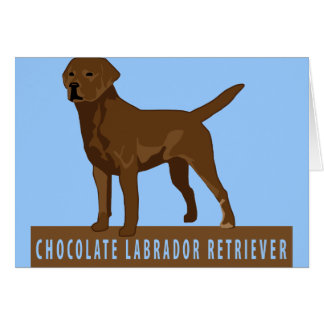 Chocolate Labrador Retriever Greeting Card