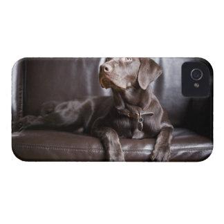 Chocolate Labrador Retriever iPhone 4 Case