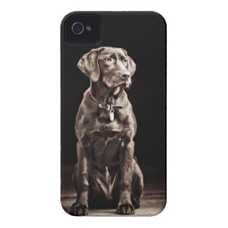 Chocolate Labrador Retriever iPhone 4 Covers