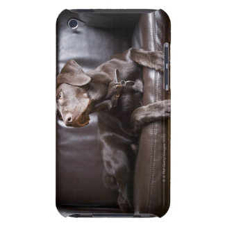 Chocolate Labrador Retriever iPod Case-Mate Case