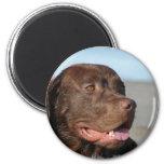Chocolate Labrador Retriever Magnet Refrigerator Magnet