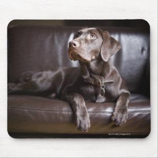 Chocolate Labrador Retriever Mouse Mat