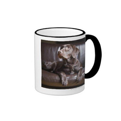 Chocolate Labrador Retriever Mugs