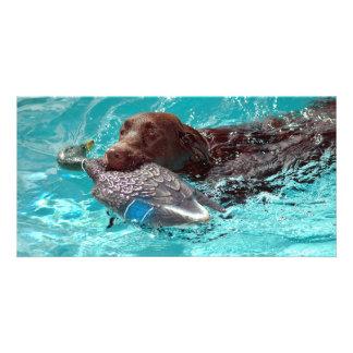 Chocolate Labrador Retriever Photo Card Template