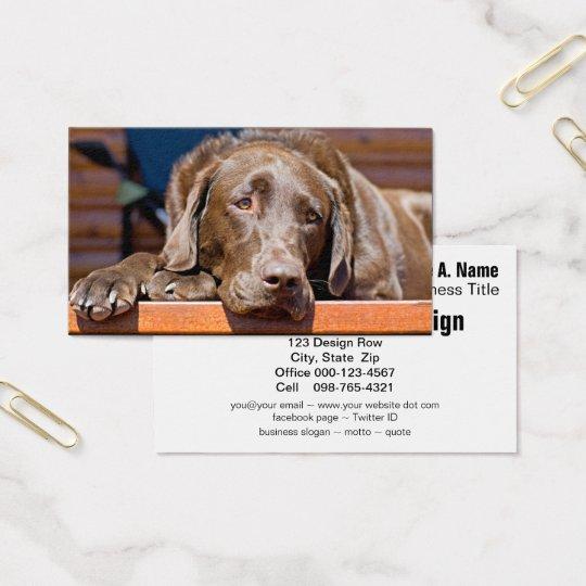 Chocolate Labrador Retriever Photograph Business Card