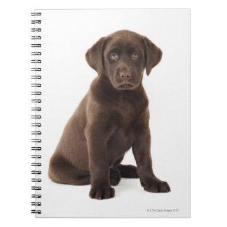 Chocolate Labrador Retriever Puppy Notebook