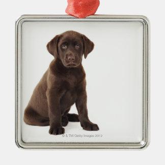 Chocolate Labrador Retriever Puppy Silver-Colored Square Decoration