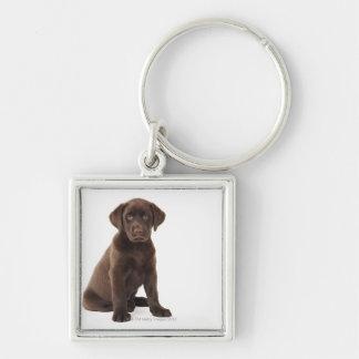 Chocolate Labrador Retriever Puppy Silver-Colored Square Key Ring