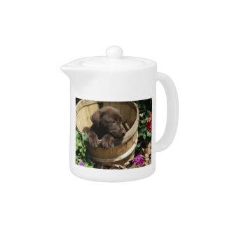 Chocolate Labrador Retriever Puppy Teapot