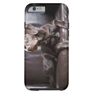 Chocolate Labrador Retriever Tough iPhone 6 Case