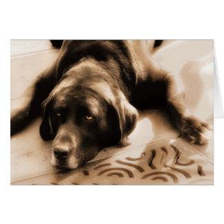 Chocolate Labrador Sepia Hues Blank Card