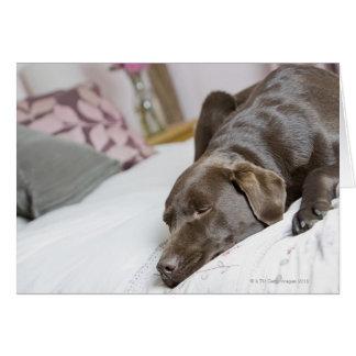 Chocolate labrador sleeping on bed greeting card