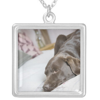 Chocolate labrador sleeping on bed silver plated necklace