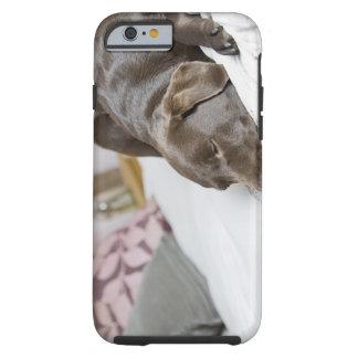 Chocolate labrador sleeping on bed tough iPhone 6 case
