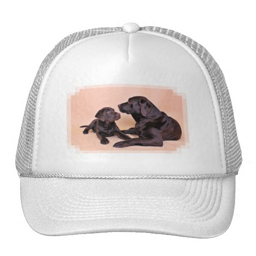 Chocolate Labradors Mesh Hats