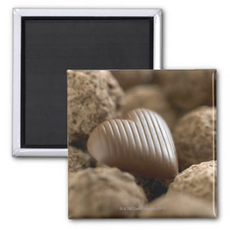 chocolate nestled amongst other chocolates square magnet