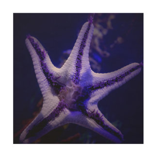 Chocolate Starfish Wood Wall Art