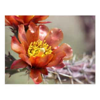 Cholla Bloom Postcard