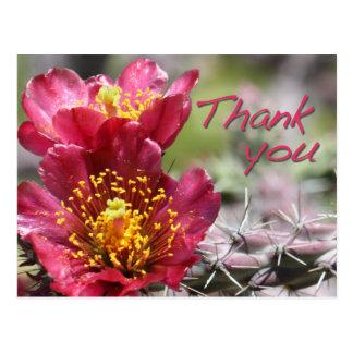 "Cholla Bloom ""Thank You"" Postcard"