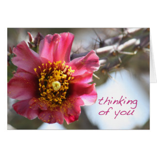"""Cholla Cactus Flower """"Thinking of You"""" Greeting Card"""