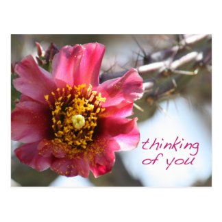 """Cholla Flower """"Thinking of You"""" Postcard"""