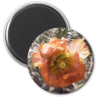 Cholla Peach Bloom Magnet