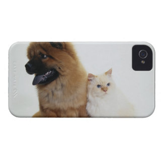 Chow Chow and a White Cat Sitting Together iPhone 4 Covers