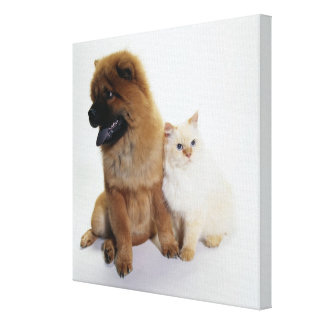 Chow Chow and a White Cat Sitting Together Stretched Canvas Print