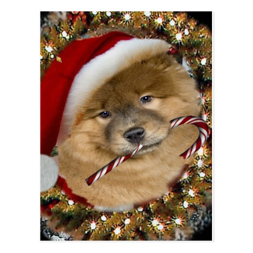 Chow Chow Christmas Candy Cane gifts Postcards