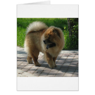 chow chow full card