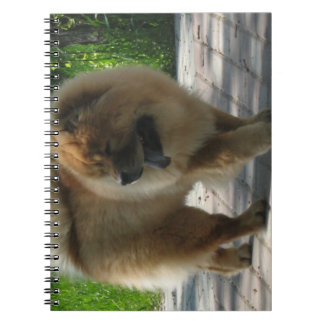 chow chow full.png notebook