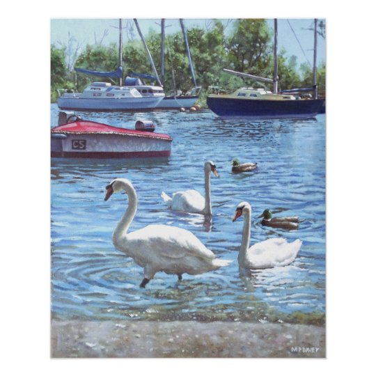christchurch harbour swans and boats poster